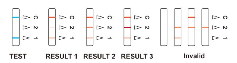 SARS-CoV-2 Neutralizing antibody Test Cassette (2)